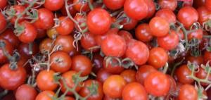tomates cereja