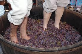 Passeio inclui a tradicional pisa da uva